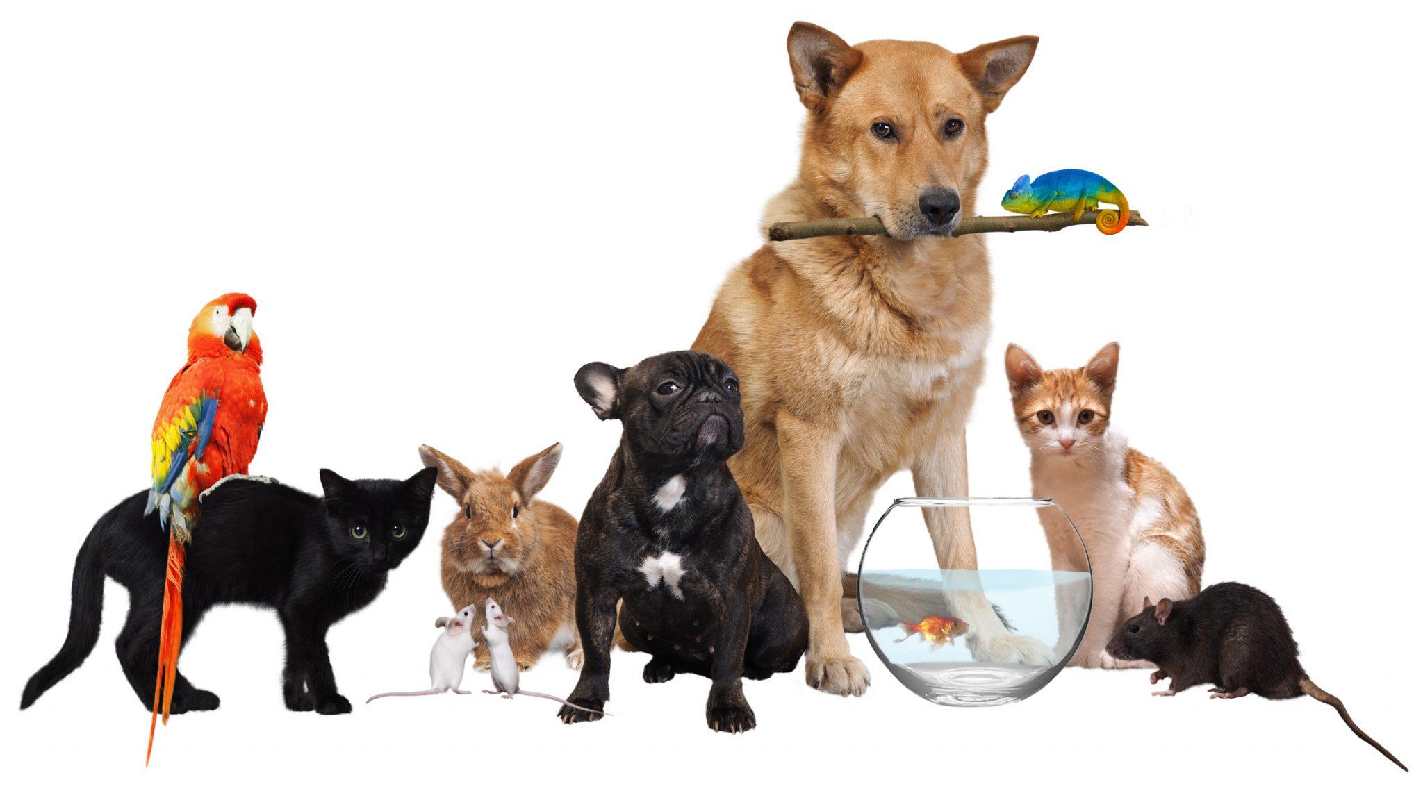 We Love Pets - Hometown Press