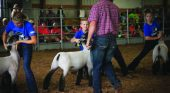Special edition livestock shows pave the way for local youth to exhibit during COVID-19