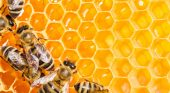 National Honey Bee Day, August 15, by Deb Johnson